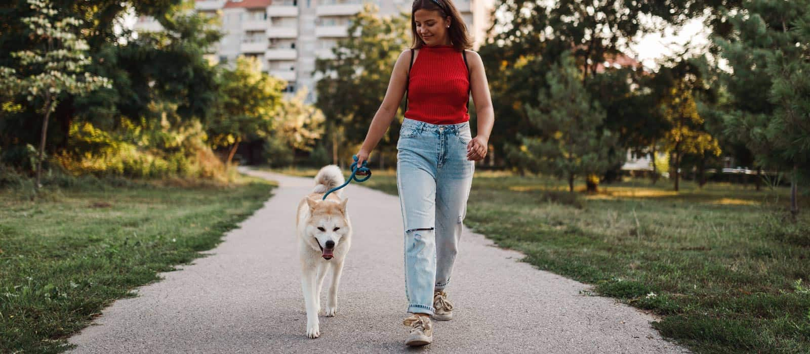 Female in red shirt and jeans walking a white dog on a pavement pathway in a park